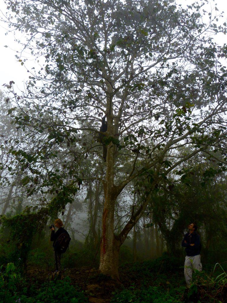 Hiking Chitwan national park Nepal