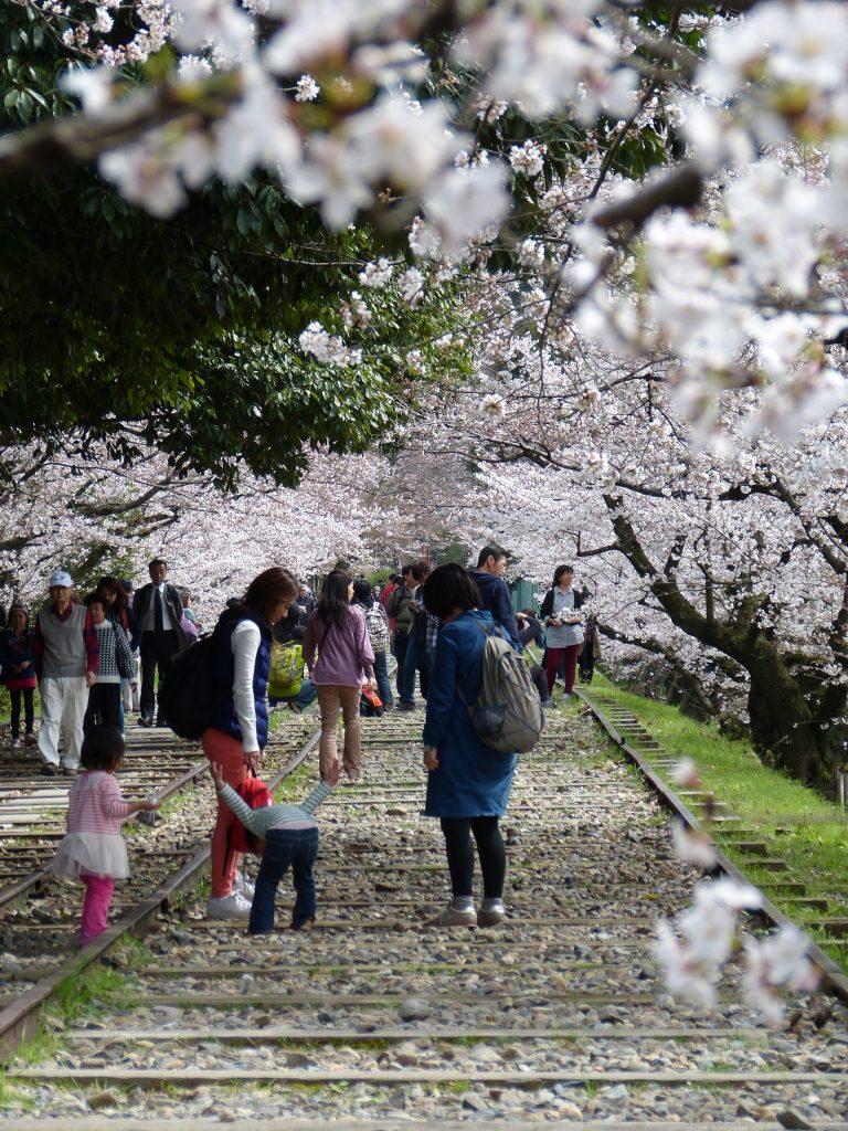 Cherry blossom Keage incline Familyearthtrek