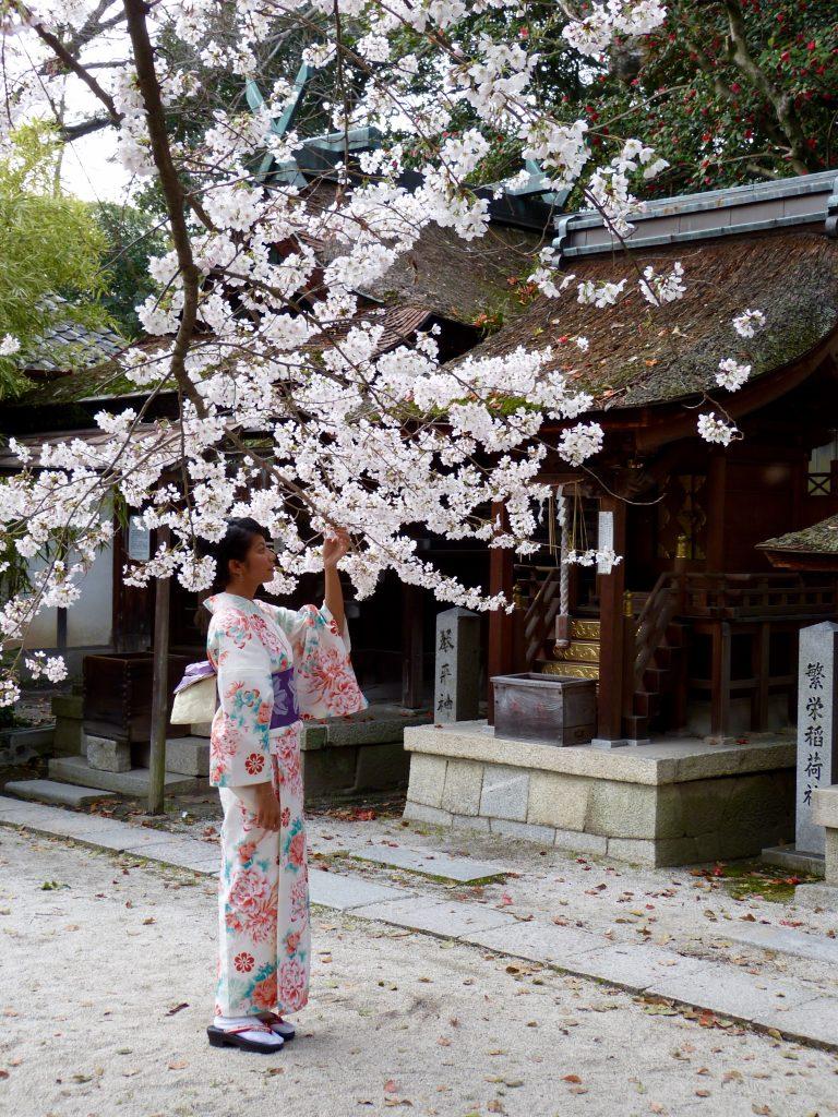 Cherry blossom Japan familyearthtrek