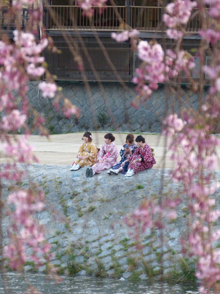 Cherry blossom kamogawa river Japan Familyearthtrek