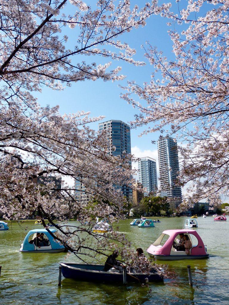 Cherry blossom Inokashira park Japan Familyearthtrek