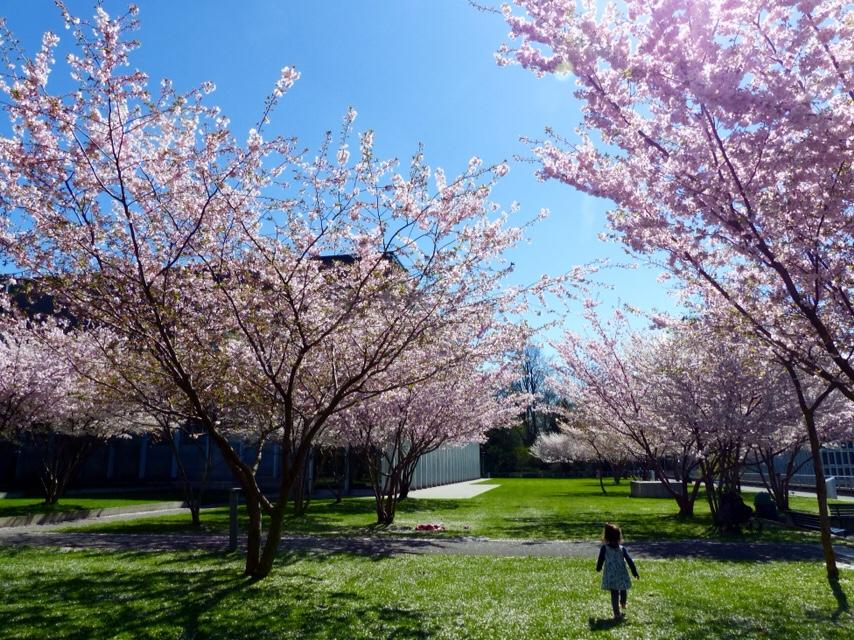 Spring flowers in Switzerland, spring hikes in switzerland, childfriendly spring hikes in switzerland